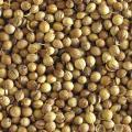Кориандр, зерно кориандра, coriander, 2019