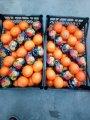 Oranges. Export from Turkey
