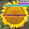"""Гібрид соняшнику Презент від ТОВ """"АФ НПП АГРОМИР"""""""