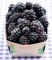 Blackberry fresh organic