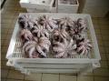 Лотки для рыбы, пищевая тара, оборудование для заморозки, дефростации, хранения рыбы и морепродуктов