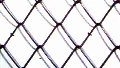 Сетка РАБИЦА, 50х50 мм