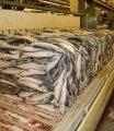 Плиточные аппараты для блочной заморозки рыбы, мяса и фарша