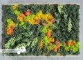 """Картина """"Orange&Green Big"""" из стабилизированного мха и растений от """"Artis Green"""", P22"""