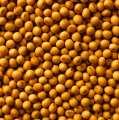 Семена сои сорт Мэдисон