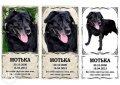 Паматные таблички для животных (изготовление 1 час)