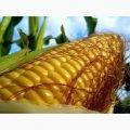 Семена кукурузы Фабрис / п.о.