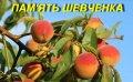 """Саженцы персика """"Память Шевченко"""""""