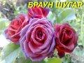 """Роза """"Браун Шугар"""" спрей (ЗКС)"""
