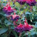 Комнатные цветы Одесса