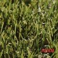 Декоративная трава Easy Lawn Botanic