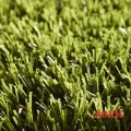 Декоративная трава Easy Lawn Rosemary