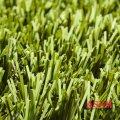 Декоративная трава Easy Lawn Sage