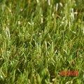 Декоративная трава Star Lawn Talia