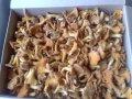 Грибы лисички замороженные бланшированные до 5 см