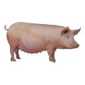 Кормовые концентраты, 3325 У Премикс для свиноматок (супоросных),2,5%.Провими, Пурина, 25 кг