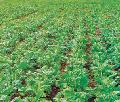 Гербицид Триумф минеральные и органические удобрения