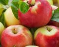 Яблоки Лиголь
