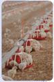 Кормушки автоматические  для оборудования по напольному выращиванию бройлеров