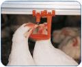 Каплеулавливатели, ниппели для напольного и клеточного содержания птицы