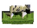 Комбикорм для телят от 2 до 6 мес.