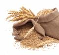 Овес семена Скакун