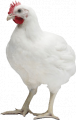 Комбикорм для цыплят-бройлеров ГРОВЕР   (с 12 по 35 день жизни)