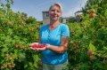 Саженцы малины сорт летний Козырная
