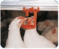 Краплевловлювачі, ніпелі для напольного й клітинного змісту птаха