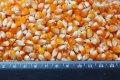 Предлагаем для расфасовки и продажи зерна кукурузы попкорн.