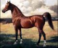Корм для лошадей НутриХорсе Мюсли