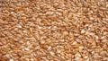Flax for export