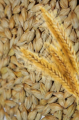 Barley for export