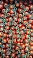 Продам тепличный помидор, Черри: марголь, эни-джери.ТОМАТЫ Анталия красный, сошер черный.