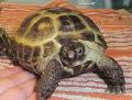 Черепахи, черепахи морские и сухопутные