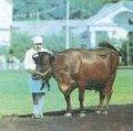 Продукти для Великої рогатої худоби