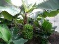 Саженцы лимонов, бананов и других экзотических растений