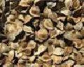 Семена гречки (гречихи), сорт Кара -Даг