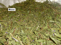 Иван чай, трава,1кг