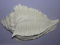 Раковины (ракушки) и другие изделия из художественной керамики