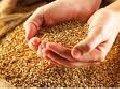 Корма зерновые