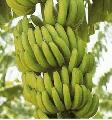 Бананы Украина