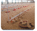 Sets of the equipment for floor cultivation of broilers and turkey-cocks