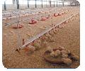Комплекты оборудования для напольного выращивания бройлеров и индюков