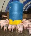 Кормушка для свиней бункерная