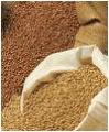 Пшеница, ячмень, жито.