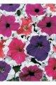 Петуния Грандифлора (крупноцветковая) Frost Mix