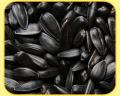 Семена подсолнечника Бонд под гранстар, 110-120 дней