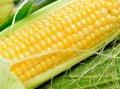 Семена кукурузы Днепровский 181, ФАО 250