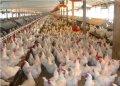Природная добавка к кормам птицы - САПОКОРМ, 25 кг